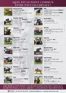 Quel est le point commun entre tous ces chevaux?